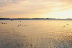 Sea gulls Stock Images