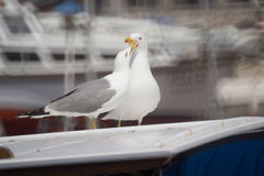 Sea gulls on vessel roof Royalty Free Stock Photo