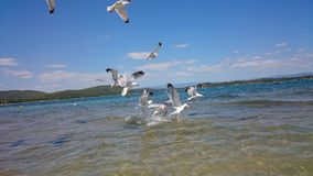 Sea gulls in water stock photos