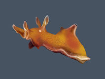 Sea hare Royalty Free Stock Photos