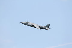 Sea Harrier Stock Photography