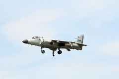 Sea Harrier Royalty Free Stock Photos