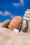 Sea Hedgehog shells and  dollar money on sand Royalty Free Stock Photos