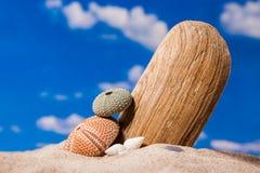 Sea Hedgehog shells on sand and blue sky Background Royalty Free Stock Photo