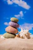 Sea Hedgehog shells on sand and blue sky Background Stock Photos