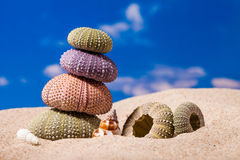 Sea Hedgehog shells on sand and blue sky Background Royalty Free Stock Photography