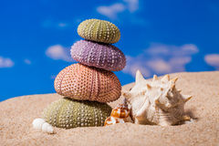Sea Hedgehog shells on sand and blue sky Background Royalty Free Stock Image