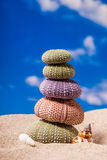 Sea Hedgehog shells on sand and blue sky Background Royalty Free Stock Photos
