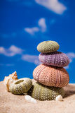 Sea Hedgehog shells on sand and blue sky Background Stock Photo