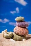 Sea Hedgehog shells on sand and blue sky Background Stock Photo