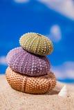 Sea Hedgehog shells on sand and blue sky Background Stock Images