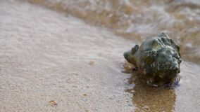 Sea hermit crab on sand tropical beach with sea wave