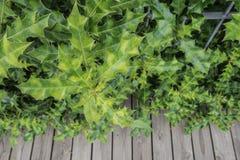 Sea holly plant Royalty Free Stock Photo