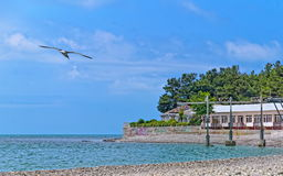 Sea horison. With seagull on foreground Royalty Free Stock Photography