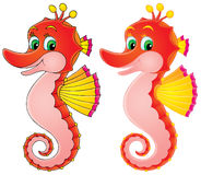 Sea Horse Stock Photography