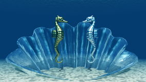 Sea horse. The image of sea horse Royalty Free Stock Photo