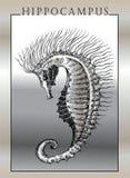 Sea horse. Vector monochrome hand-drawn images Stock Photos