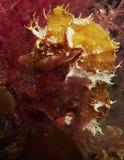 Sea Horse La Palma Canary Islands Stock Image
