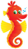Sea horse stock images