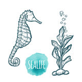 Sea Horse drawing on white background. Hand drawn seafood illustration. Royalty Free Stock Photo