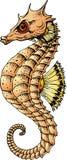 Sea horse fish. Isolated on the white background Stock Image
