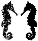 Sea horse grunge  Royalty Free Stock Photography