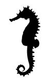 Sea horse illustration Stock Image