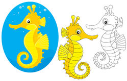 Sea horse Royalty Free Stock Images