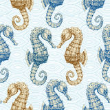 Sea horse  seamless pattern Stock Photography