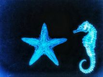 Sea horse & starfish. Sea horse and starfish in black background Stock Images