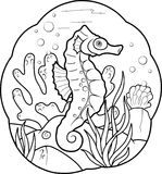 Sea horse swims Stock Image