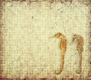 Sea Horse with texture of paper. Sea Horse with texture of handmade paper Royalty Free Stock Image