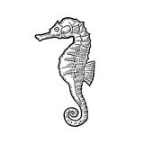 Sea Horse. Vector black engraving vintage illustrations. Stock Photo