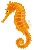Sea horse. Vector illustration of a sea horse Royalty Free Stock Photography