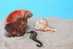 Sea-horse y concha Imagen de archivo libre de regalías