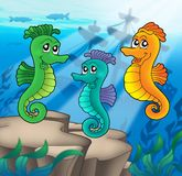 Sea horses family with shipwreck. Color illustration Royalty Free Stock Photography