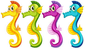 Sea horses Stock Images