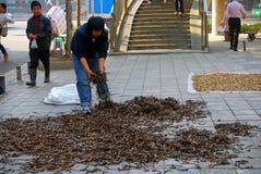 Sea horses at Qinping Market, Guangzhou, China Stock Images