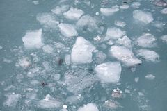 Sea ice Stock Image