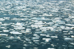 The sea ice floes Stock Photography