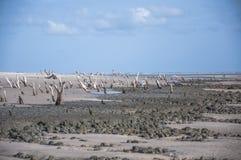 Sea island beach. Beach island sea brasil wood Royalty Free Stock Photography