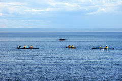 Sea kayakers and minke whale Royalty Free Stock Photography