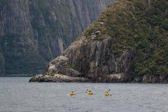 Sea kayaking in Milford Sound Royalty Free Stock Photo