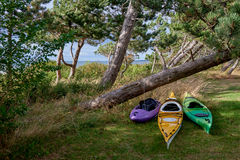 Sea kayaks ready to be used at the sea behind pine trees. Sea kayaks, summer ready at shore behind pine trees, Scandinavia, Denmark, Havnsoe - one kayak for for royalty free stock image