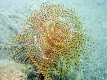Sea Kokerworm macro Royalty Free Stock Image