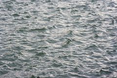 Sea land. Waves in the sea surface Stock Images