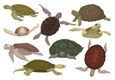 Sea and land turtles set, tortoise reptile animals in various views vector Illustration on a white background vector illustration