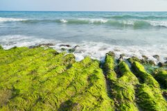 Sea landscape with ooze ashore. Green mud on the stony shore of the Mediterranean Sea royalty free stock photography