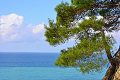 Sea landscape with pine-tree Stock Photography