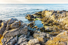 Sea landscape on the rocky coast. Calm sea landscape with some wave near rocky coast with boulders and seaweed  in early morning Stock Images